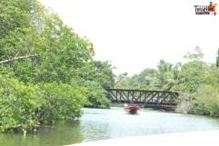 sri lanka tour itinerary - Madu River Boat Ride through Mangroves - View 5