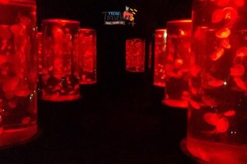 Best Places to Visit in Thailand - Pattaya Underwater Museum