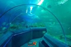 Best Places to Visit in Thailand - Pattaya Underwater Museum - View 1