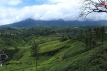 Sri Lanka tour itinerary - Scenic view - Nuwara Eliya