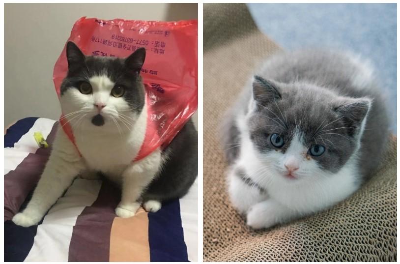 Ilustración 1: A la izquierda, el gato Garlic fallecido, a la derecha su clon.