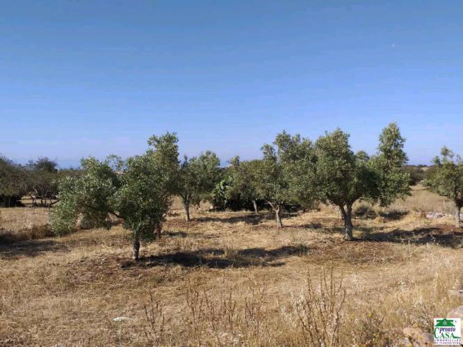 Pronto Casa: Terreno agricolo a Modica in Vendita a Modica Foto 1
