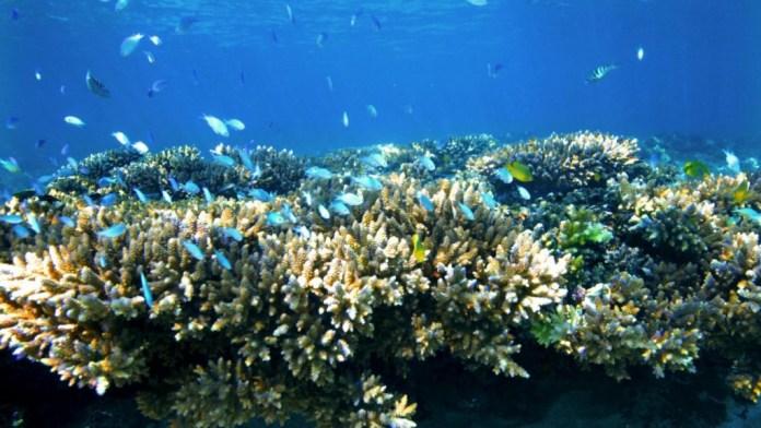 Corais de Ningaloo