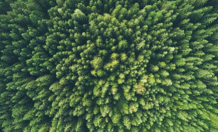 Περιβαλλοντική Πολιτική και Ευρώπη: Πού υστερεί η Ελλάδα;
