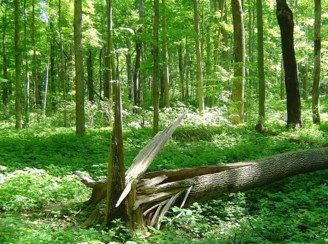 Tree Damage Insurance Claim Denied