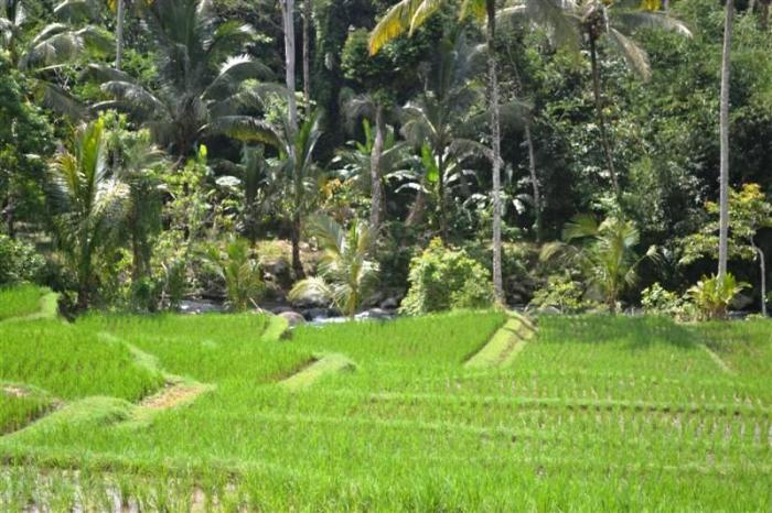 Land for sale in Tabanan Bali 3,000 m2 in Tabanan