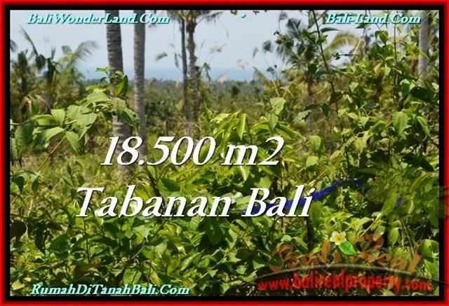 Magnificent PROPERTY 18,500 m2 LAND IN Tabanan Selemadeg FOR SALE TJTB232