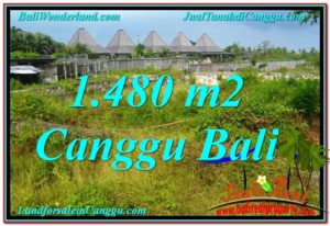 Exotic Canggu Pererenan LAND FOR SALE TJCG212