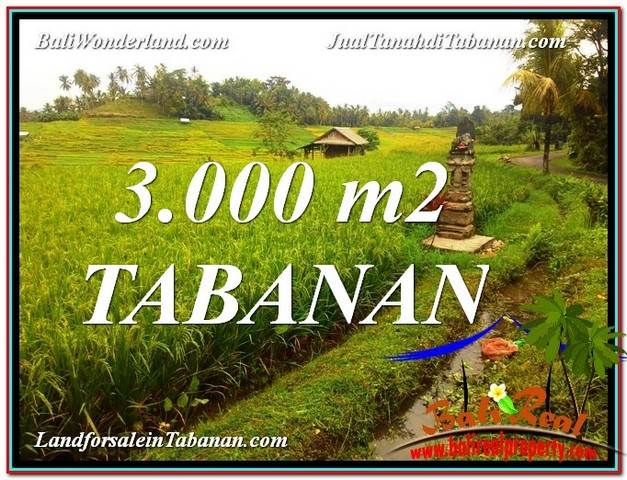 Exotic PROPERTY 3,000 m2 LAND IN Tabanan Selemadeg BALI FOR SALE TJTB328