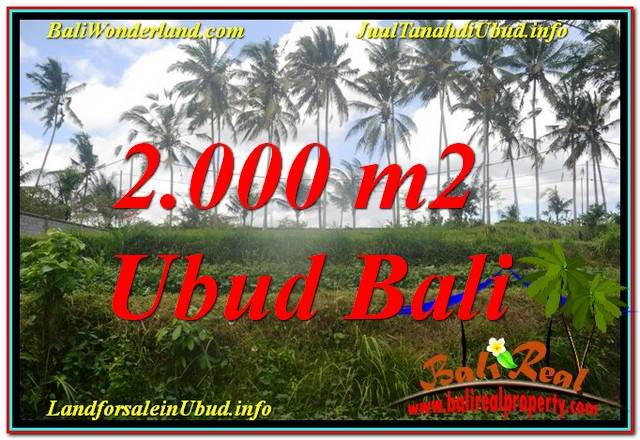 Exotic PROPERTY 2,000 m2 LAND IN Ubud Pejeng FOR SALE TJUB625