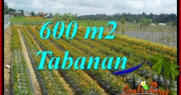 FOR SALE Magnificent PROPERTY 600 m2 LAND IN TABANAN BALI TJTB372