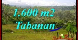 Beautiful 1,600 m2 LAND IN Tabanan Selemadeg FOR SALE TJTB378