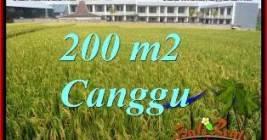 FOR SALE Magnificent PROPERTY 200 m2 LAND IN CANGGU BRAWA TJCG229