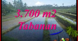 Magnificent PROPERTY LAND FOR SALE IN TABANAN SELEMADEG TJTB388