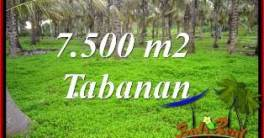 Affordable LAND SALE IN TABANAN TJTB390