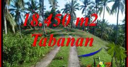 18,450 m2 Land in Tabanan Bali for sale TJTB410