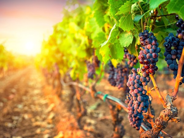 Wine Region Property Markets