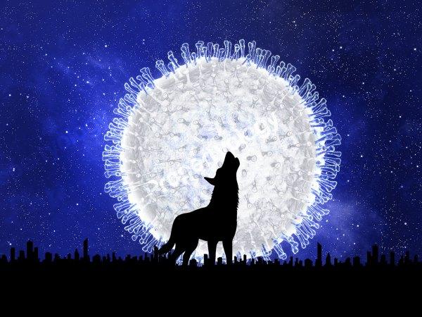 The Property Wolf Who Cried 'Coronavirus'
