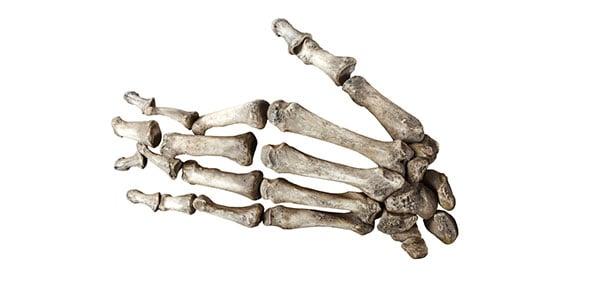 Bone Quizzes, Bone Trivia, Bone Questions
