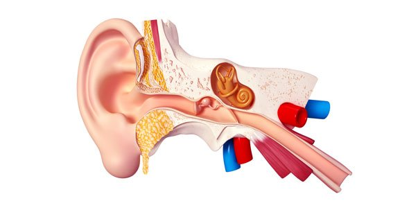 Middle Ear Disorders Trivia Quiz - ProProfs Quiz
