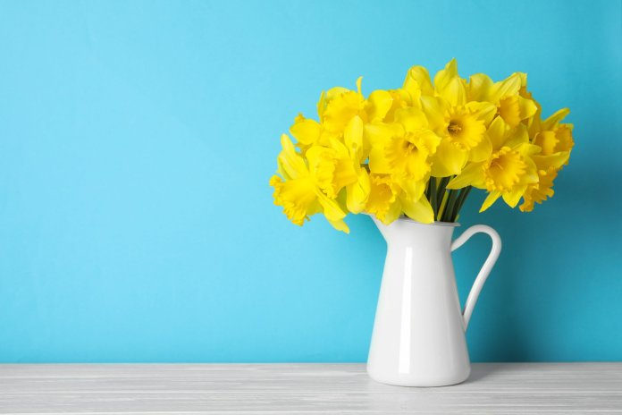 Bouquet of daffodils for William Wordsworth's birthday