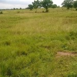 Land for Sale, proteanrealestate.com, Protean Real Estate Company Limited, Real Estate Companies, Real Estate In Ghana, Properties For Sale, Properties For rent