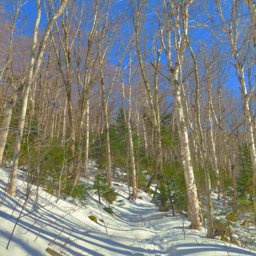 Scaur Ridge Trail with deep blue sky and trees