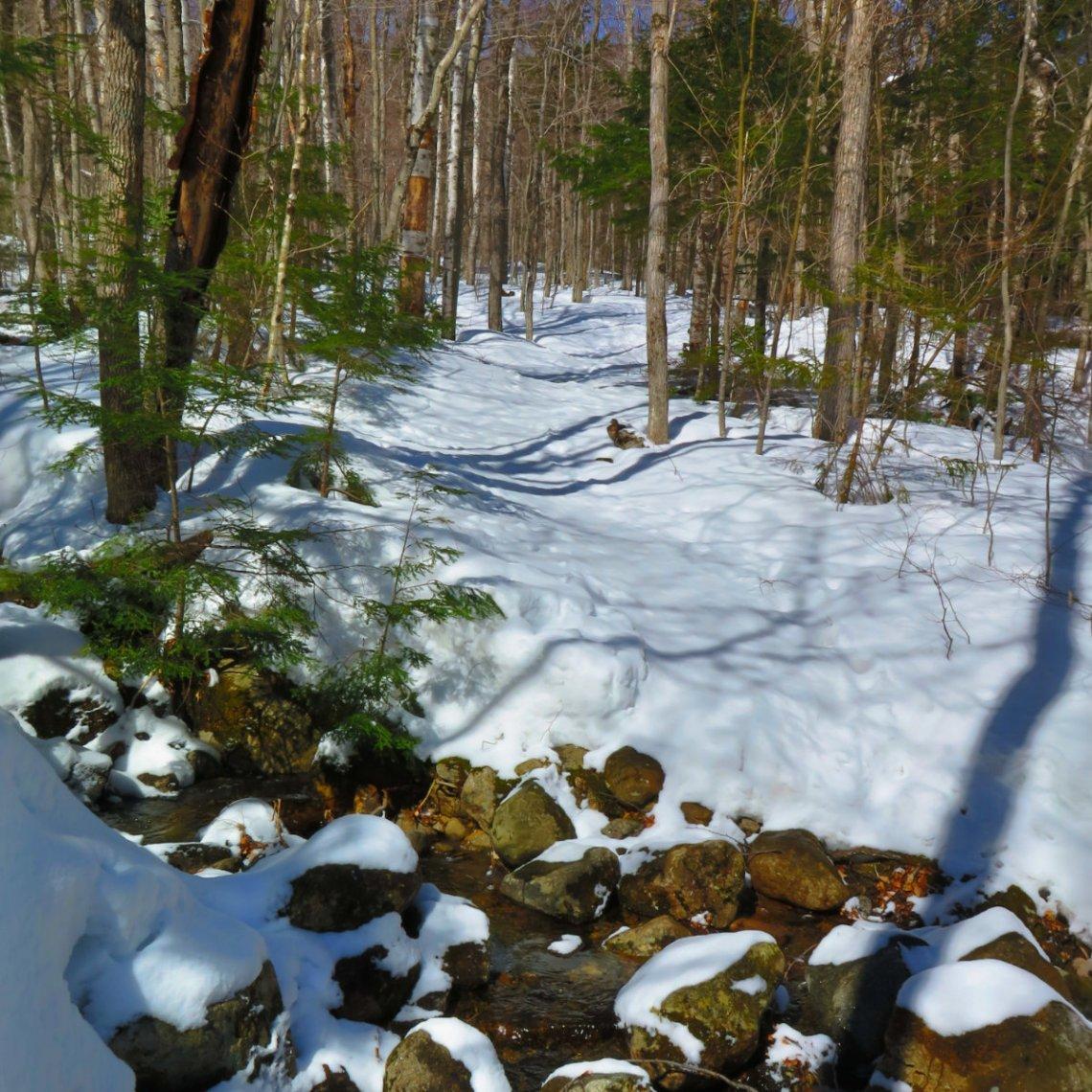 Rocky-Branch-Trail-20180409