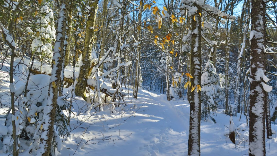 Moosilauke-Trail4-20190117