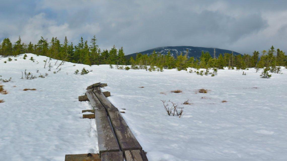 Jackson-Alpine-Bog-20190204