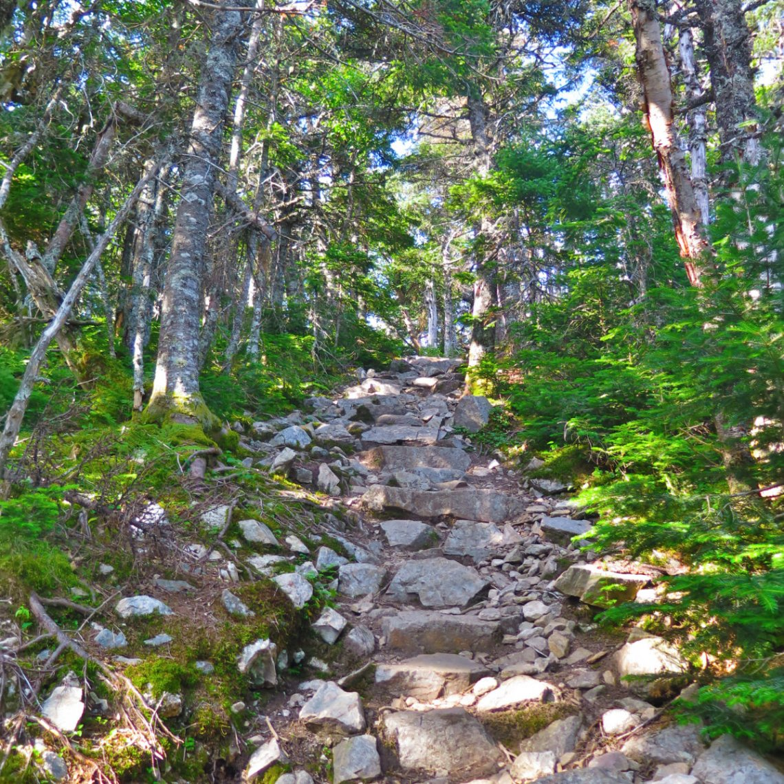 Summit_Stairs_Carrigain_20190803