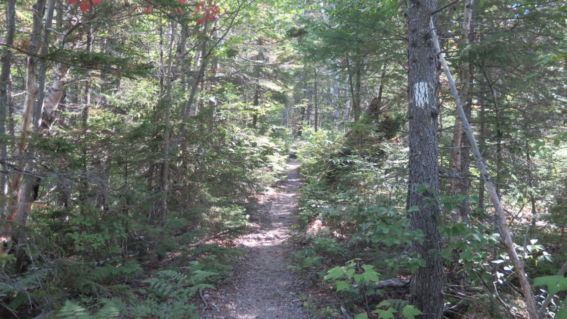 Ethan-Pond-Trail-AT-Forest-20190907