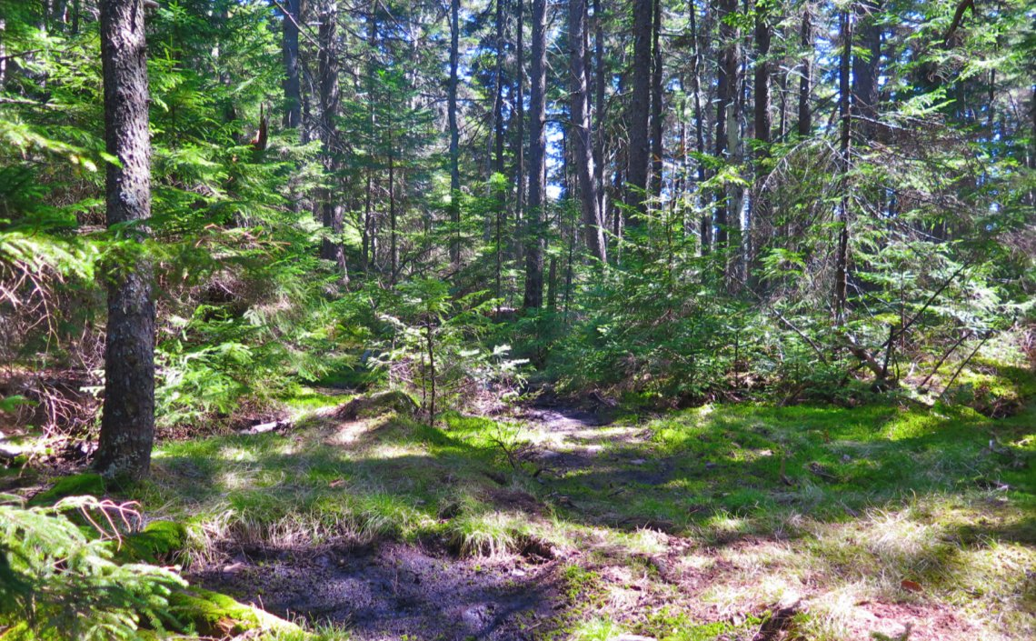 13-Mossy-Trail-2-Ragged-20200520