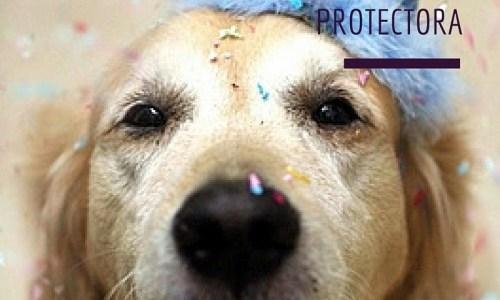 SORTEO Solidario Protectora Doggy