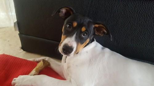 Inoa, Bodeguero Cachorra