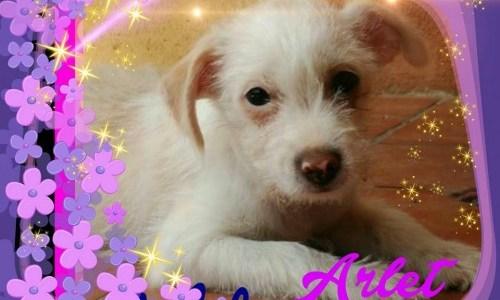 Arlet, Preciosa Cachorra Busca Mimos