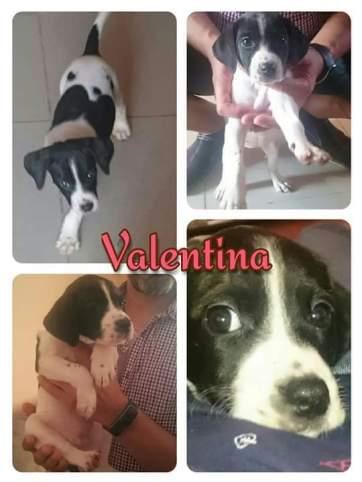 Valentina en adopcion