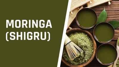 Moringa (Shigru)