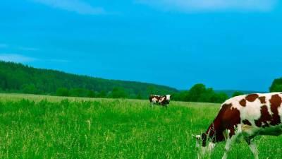 Protéines de lait bio native