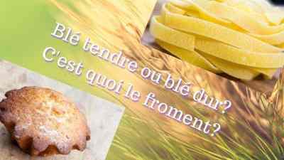 Read more about the article Blé tendre ou blé dur?