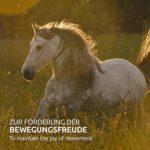 greenpet 100% naturel Glucosamine KCl 500g poudre–Le soutien de Articulations à cheval et chien