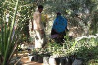 Hadibo nursery