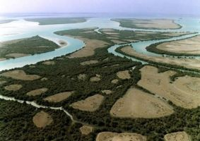 Hara mangrove forest2