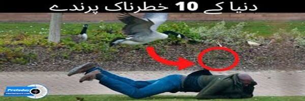 10 Most Dangerous Birds