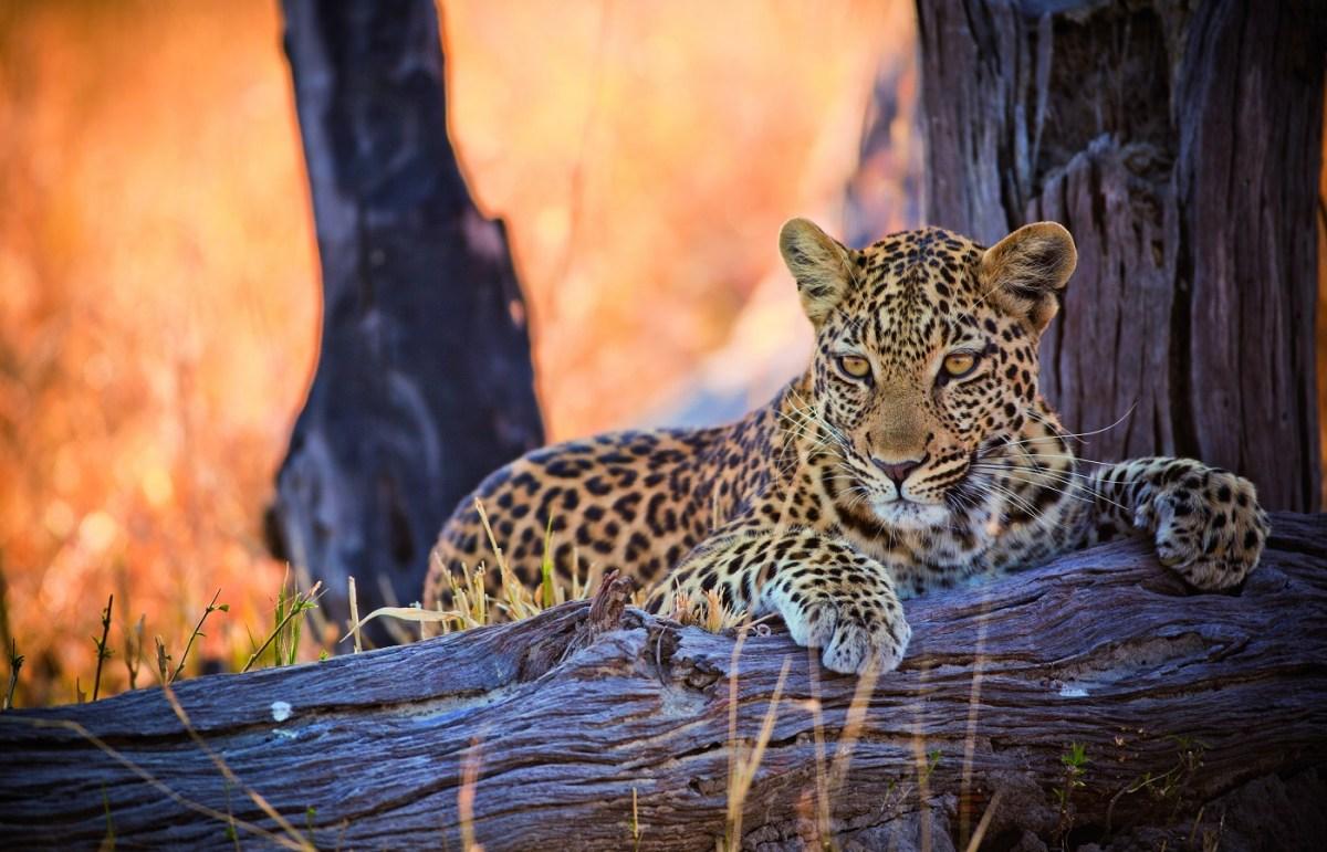 Belmond Safaris, Botswana