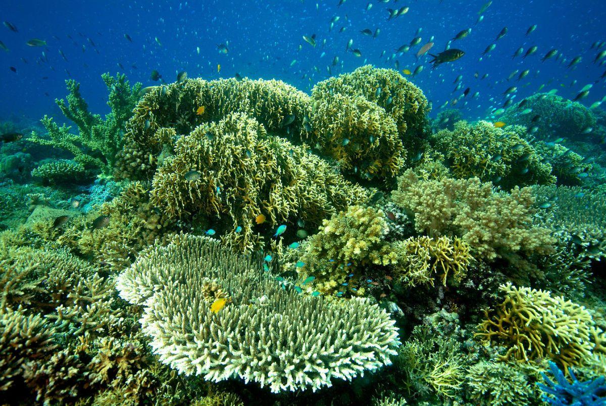 Tauchen vor der Küste von Moyo Island, Indonesien