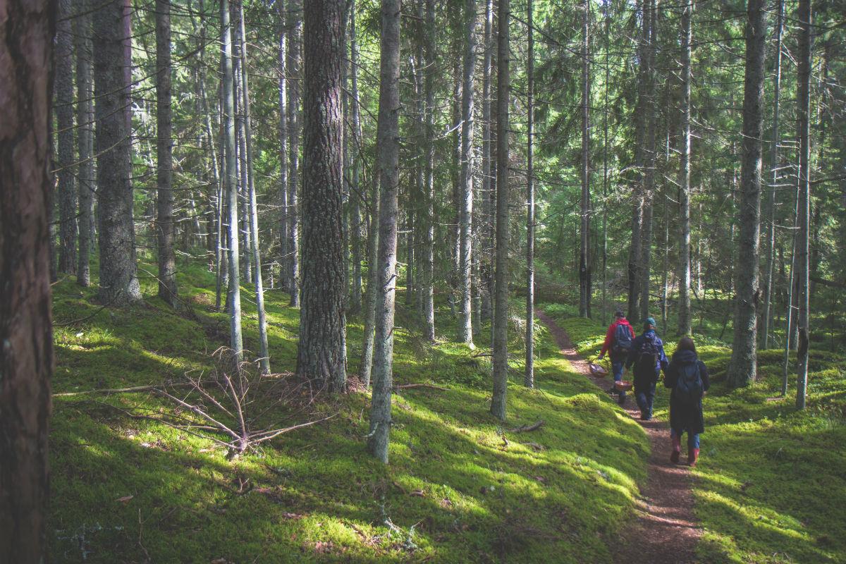 Entspannen, Estland, Wald, Verweilen