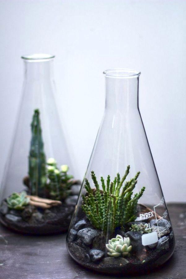 terrarium in a laboratory flask