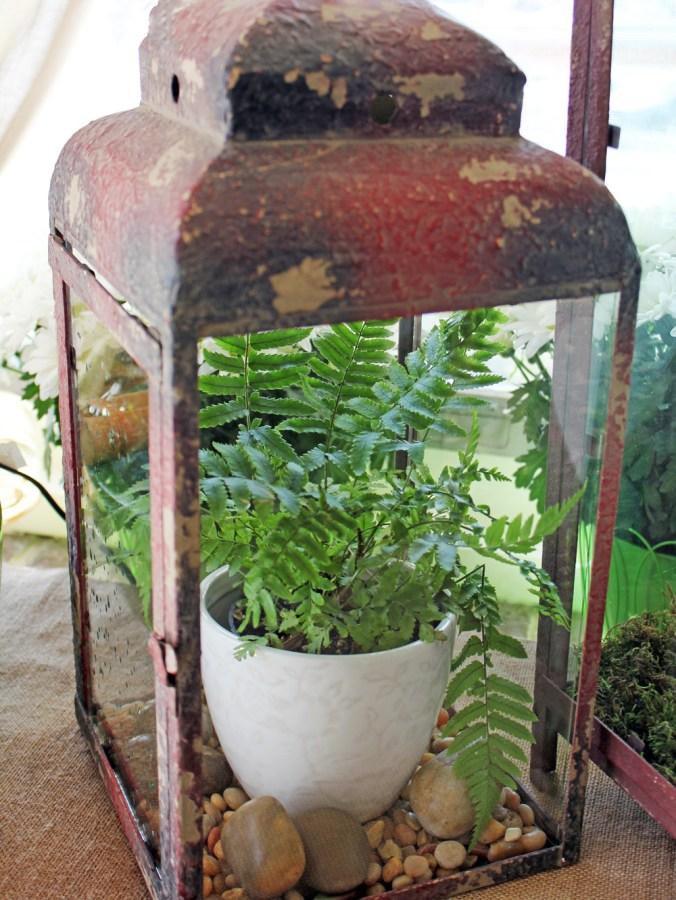 Antique Lantern with fern plant