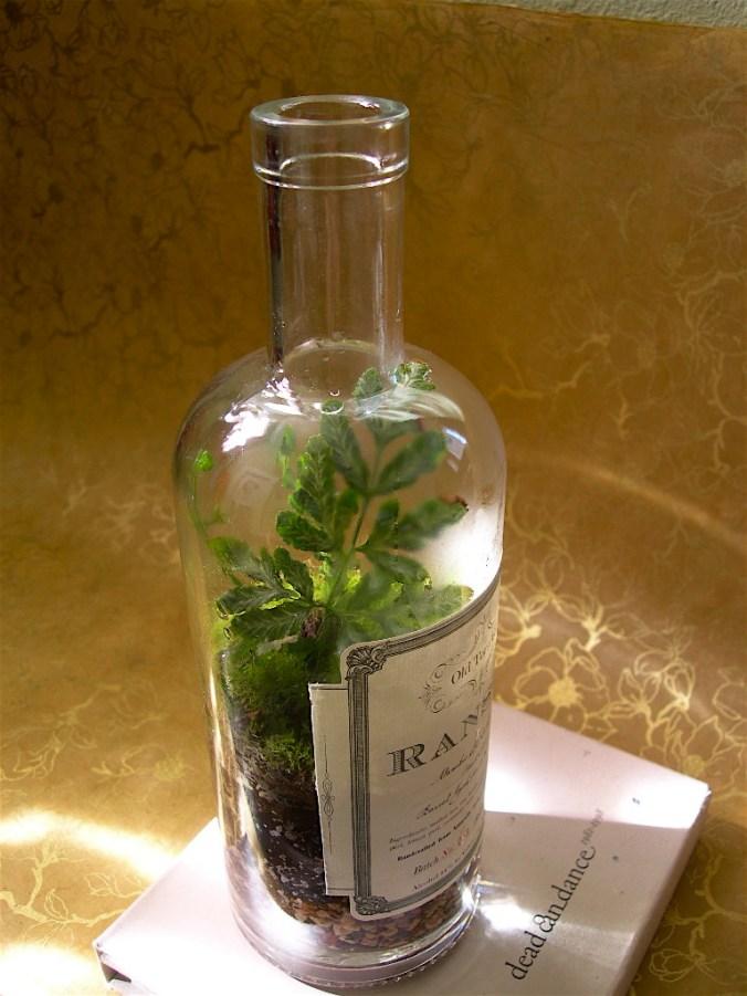 Wine bottle terrarium diy